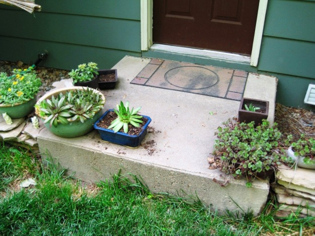 succulent garden on the back step