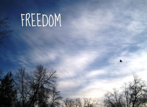 freedomthanksgivingcrow