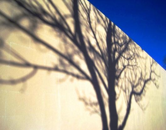 shadowtree