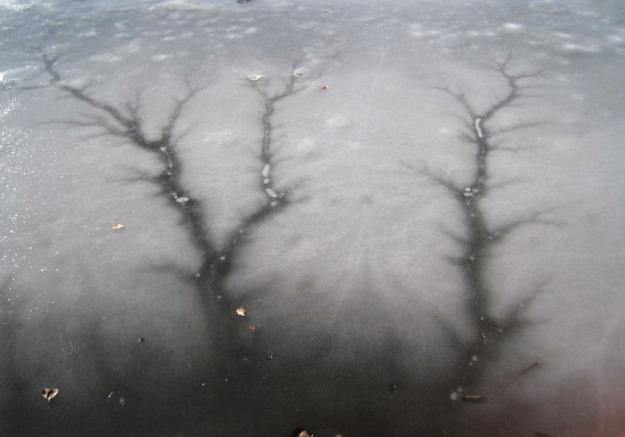 treeshadowicecrack