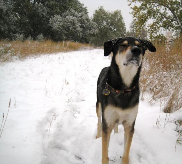 snowobi