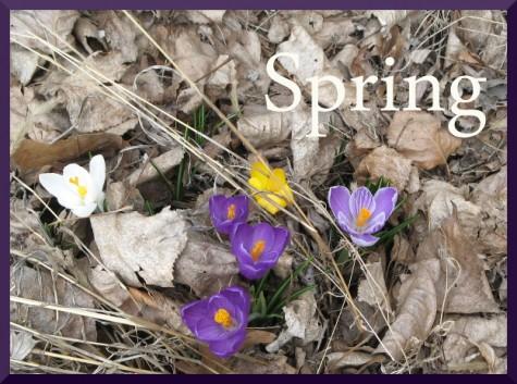 Spring-475x353