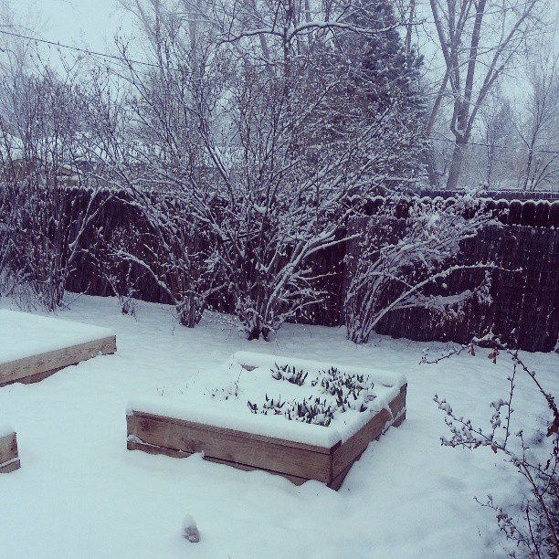 woke up to this, April snow