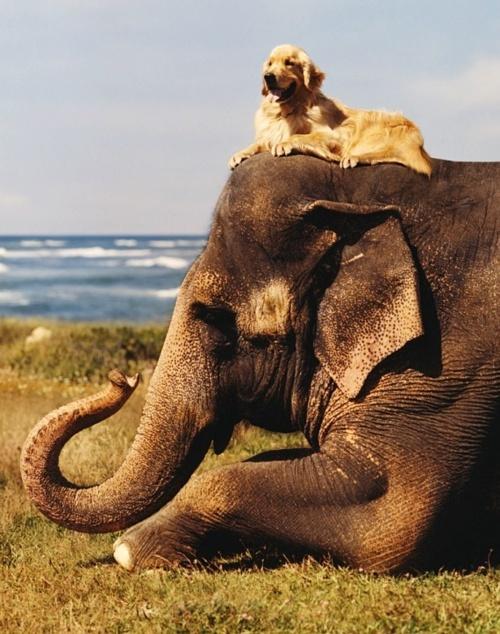 elephantwithdoghead
