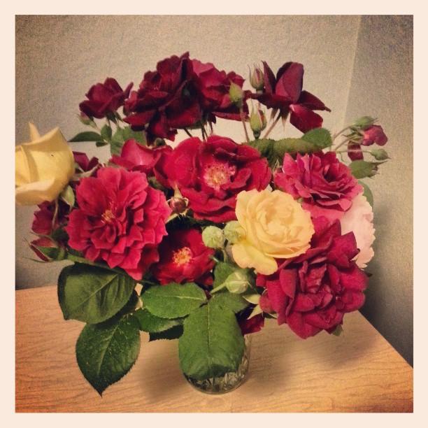 rosesfrommygarden