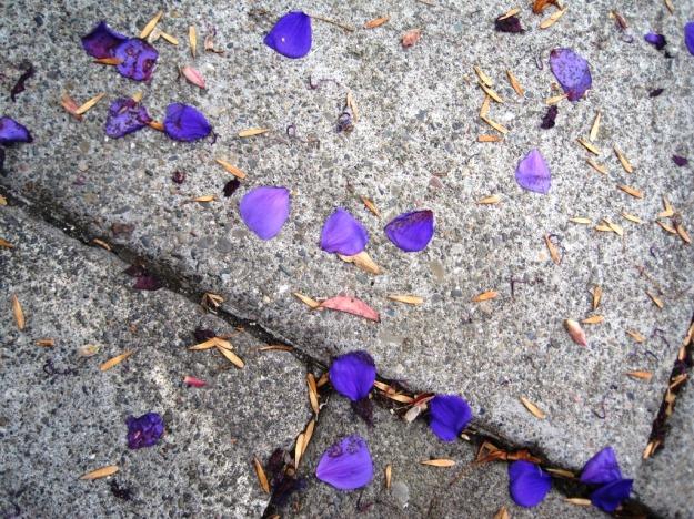 purplepetals03