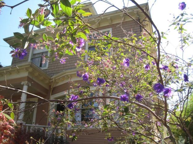 purpleplant