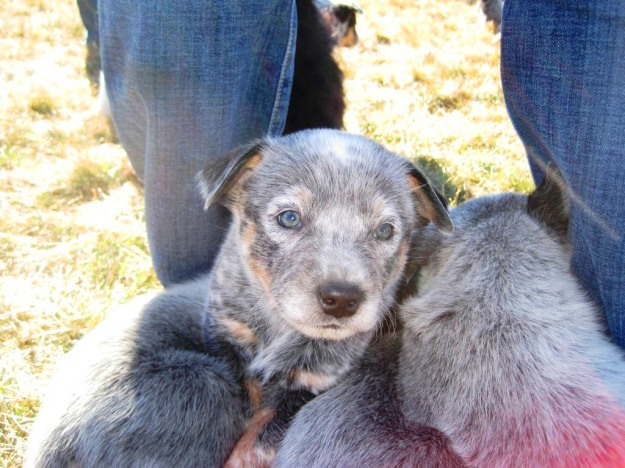 puppypile04