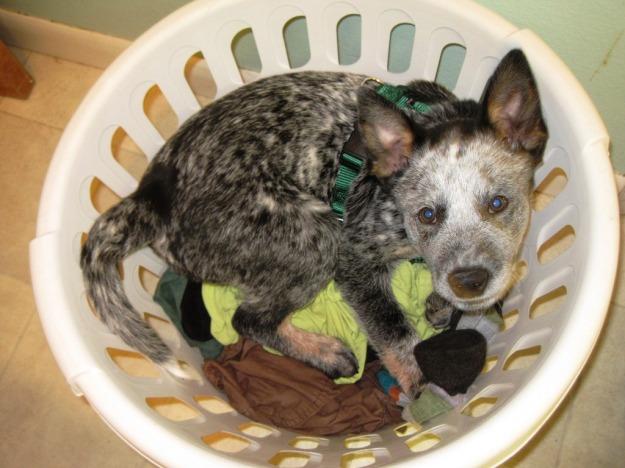 """ringo """"helping"""" me do laundry"""