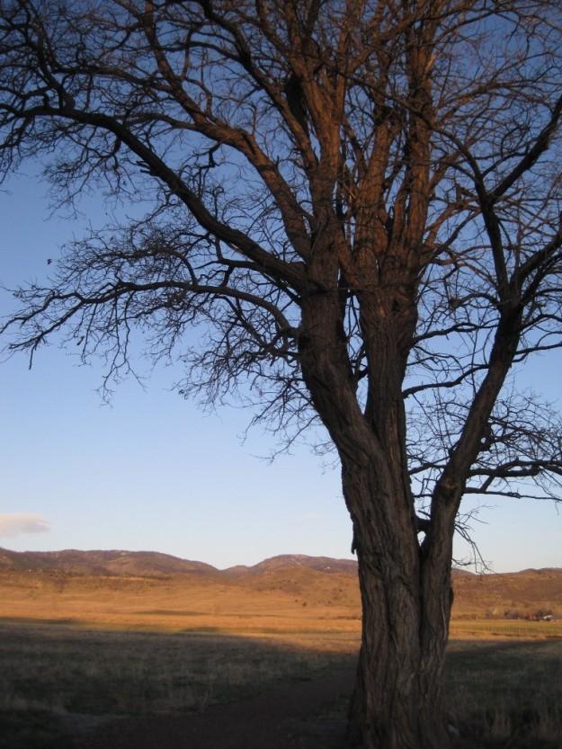 michoudlanetree