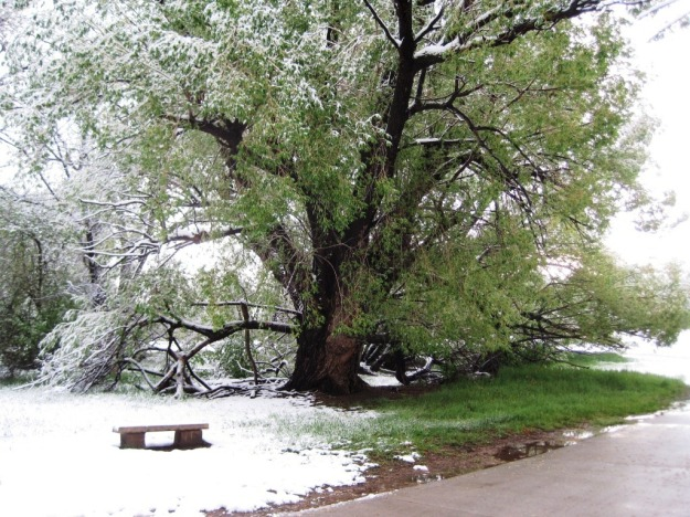 Image from this morning's walk. Spring in Colorado can be confusing...