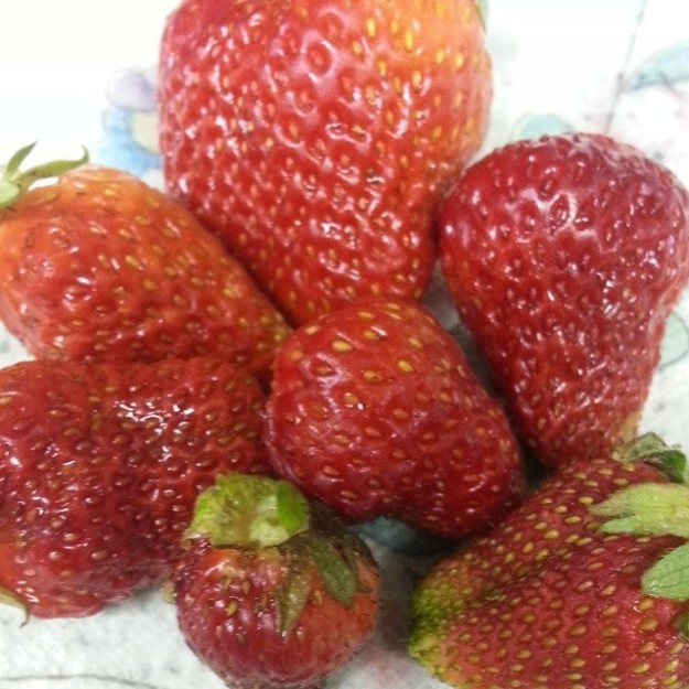 strawberriesfromgarden