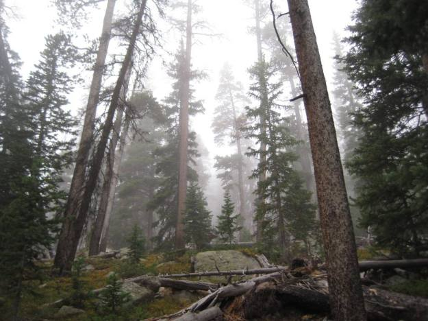 Fog on the North Lone Pine Trail