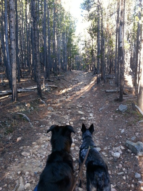 Sam, Ringo, and Eric took a very long hike together yesterday morning