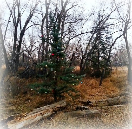 Every year, just after Thanksgiving, someone sneaks into the park where we walk our dogs and decorates three trees that stand next to the trail. This is the Charlie Brown one.