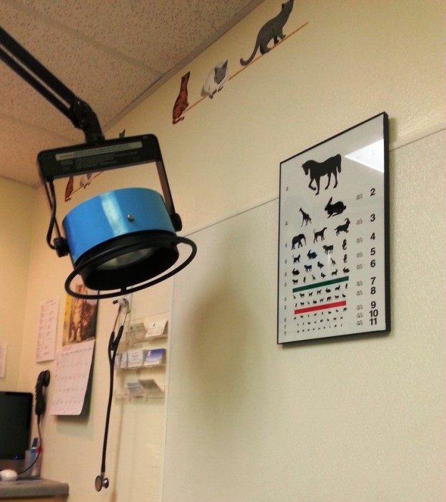 Doggie eye chart