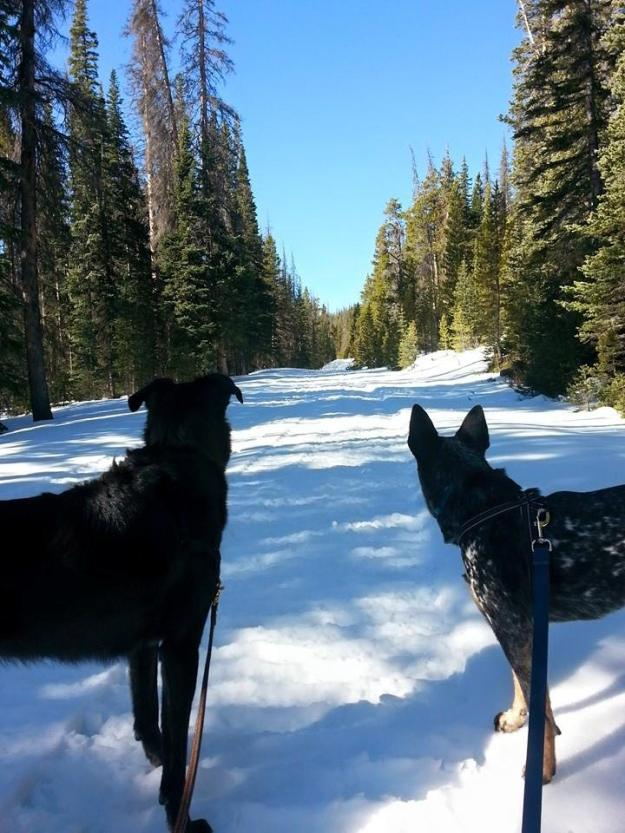 Sam and Ringo hiking on Deadman Road, image by Eric