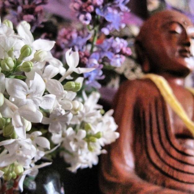 lilacbuddha