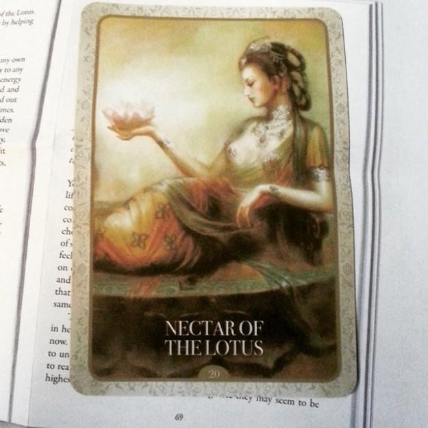 nectarofthelotus