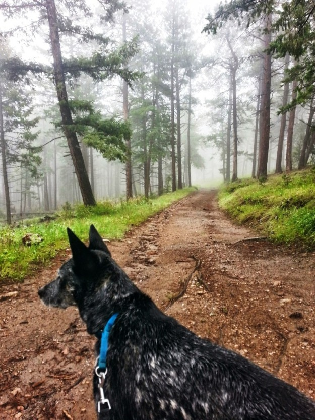 Ringo hiking at Lory State Park, which looks more like it's in Oregon than Colorado, (image by Eric)
