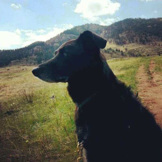 Sam hiking at Lory State Park