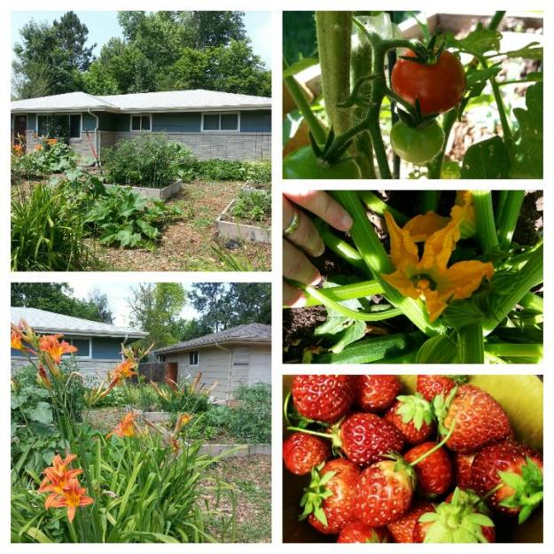 ourgardenjuly