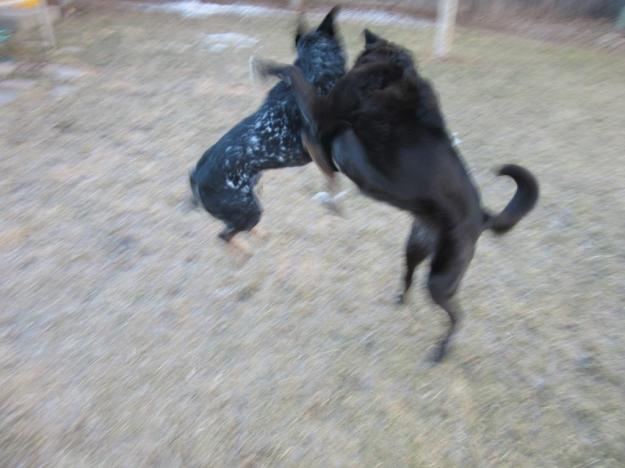 dogfu