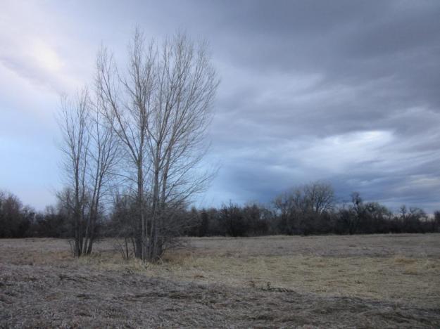 grayskytrees