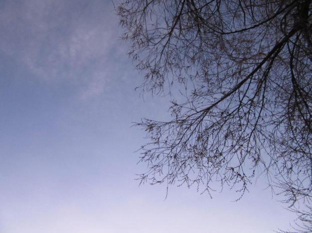 morningtreebuds