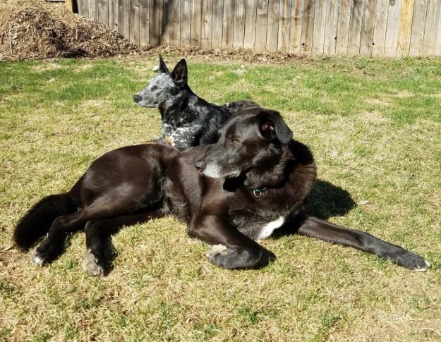 sundogslounging