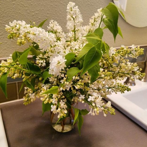 bathroomlilacs