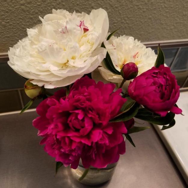bathroompeonies