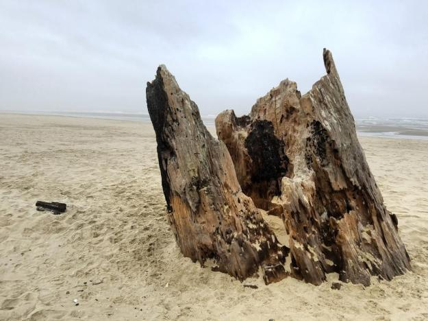 beachstump