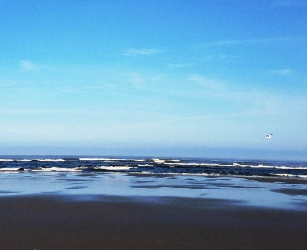 beachwithgull
