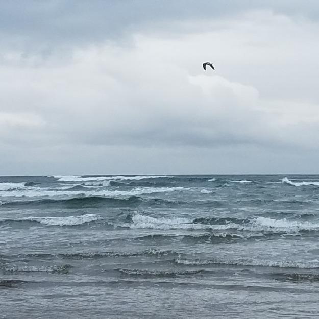 wavesandgull
