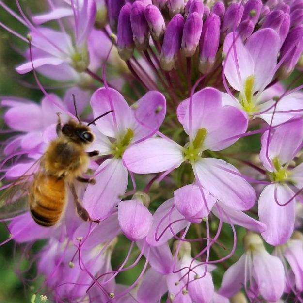 beeplantandbee