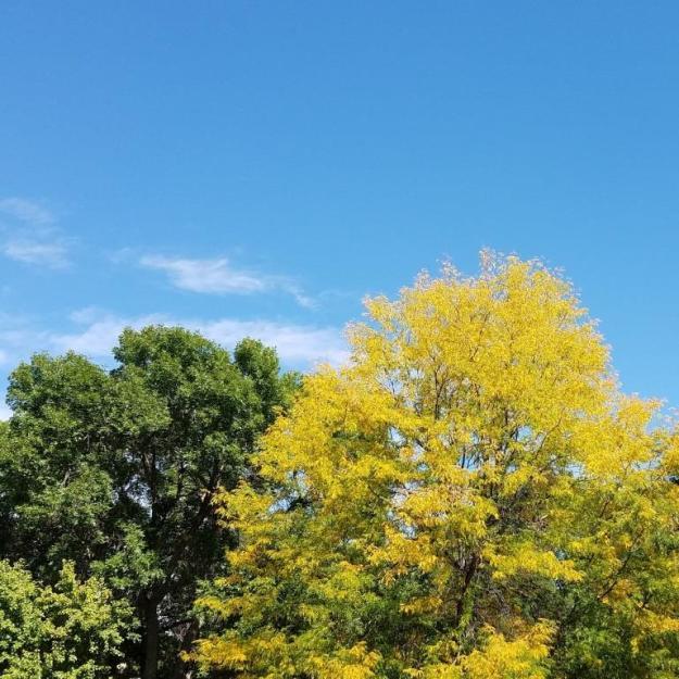 fallcolor03