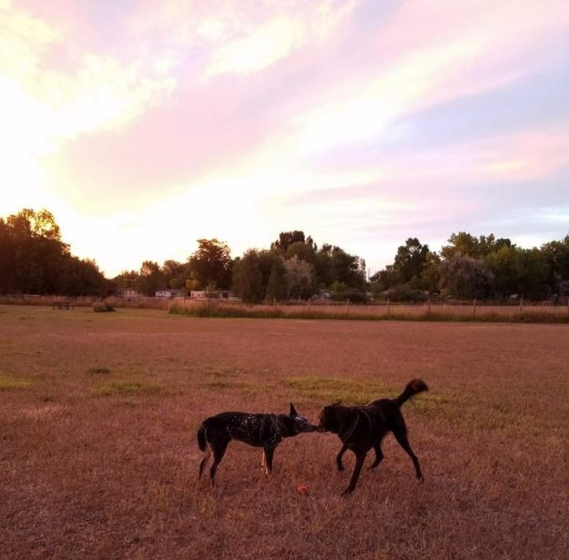 Little dog park at sunrise