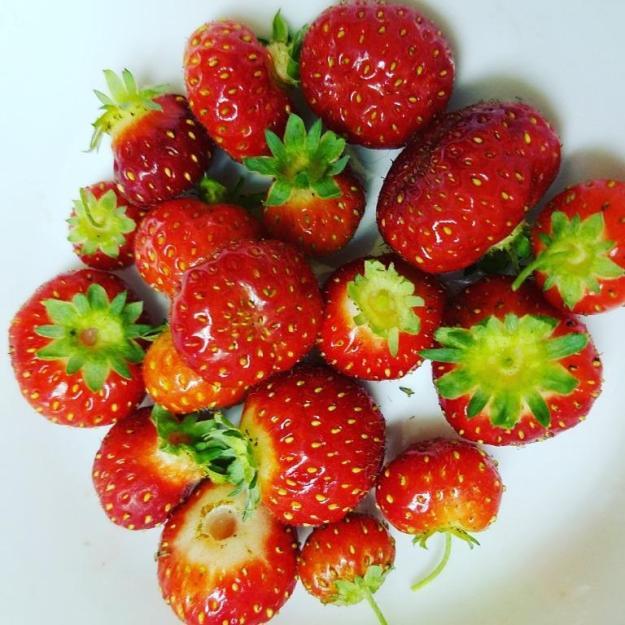 lastberries