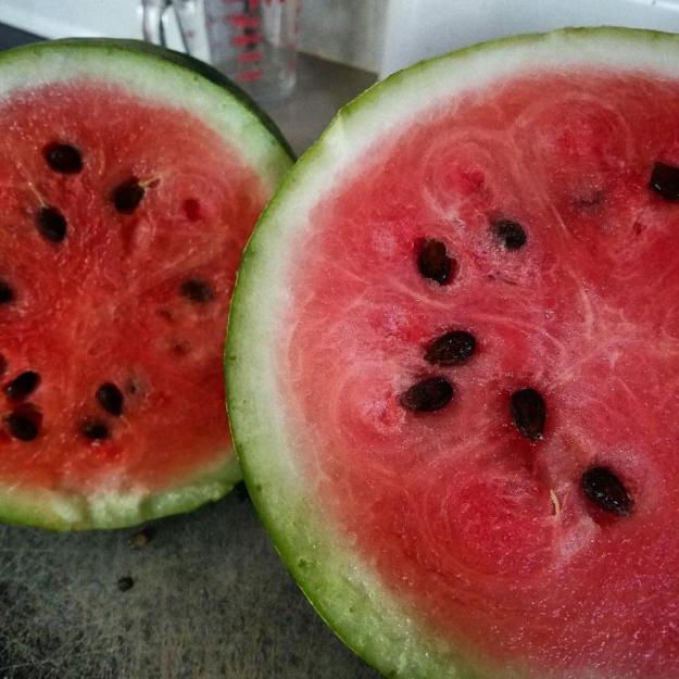 lastwatermelon