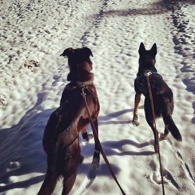 snowtraildogs