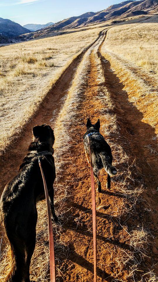 traildogs02