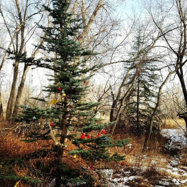 Poudre Trail Charlie Brown Christmas tree