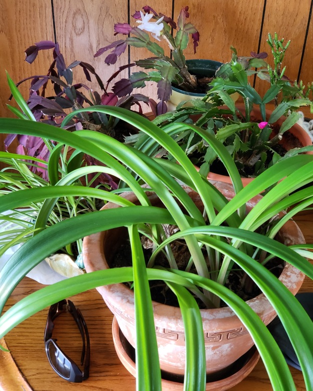 A collection of plants