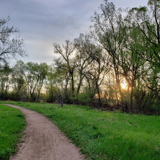 Trail, trees, and sunrise on our walk this morning