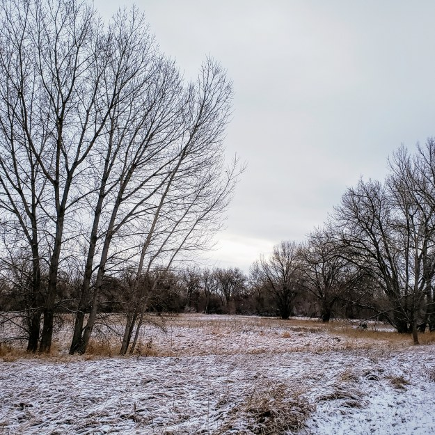 A snowy field with trees